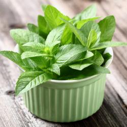 Mẹo trồng cây bạc hà ít tốn kém mà đuổi muỗi cực kỳ tốt